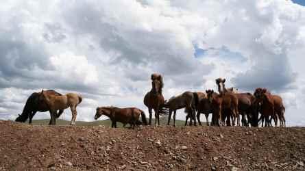 hevosetsmal